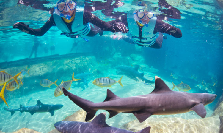 9f076e0f354c1 Nado com os tubarões no Discovery Cove   Orlando em Revista
